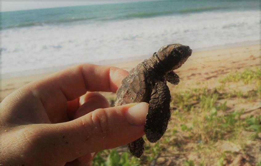 Sea-turtles-volunteer-in-Brazil.jpg